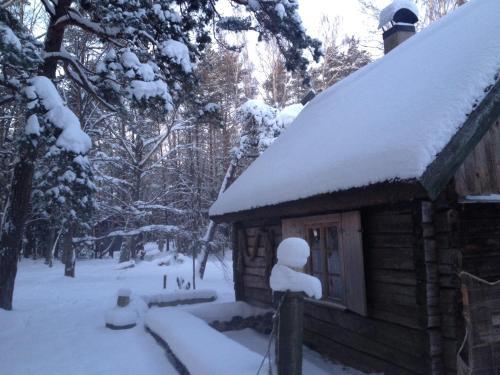 Liedegas a l'hivern