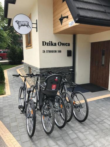Rowery dostępne w obiekcie Dzika Owca lub w pobliżu