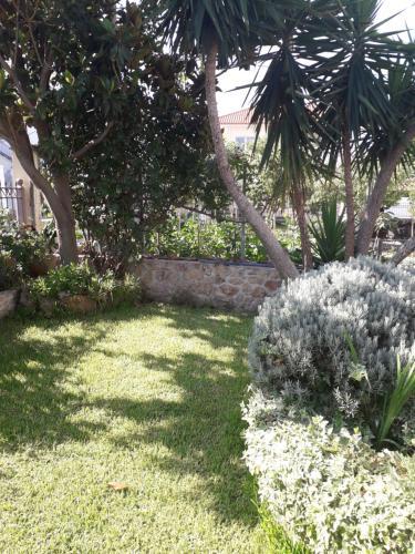 A garden outside Roses