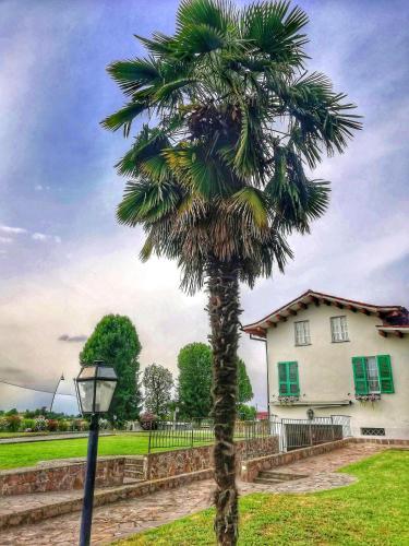 SABAL MINOR und Ihr Garten sieht aus wie in Italien