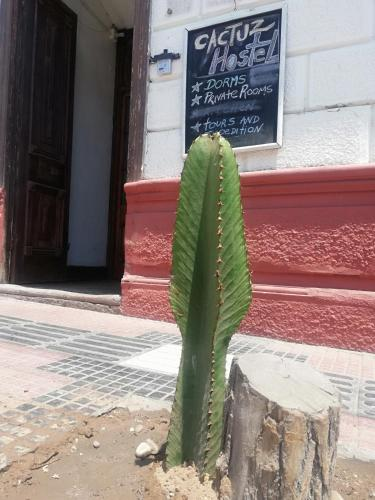 Hostel Cactuz Chile La Serena Booking Com