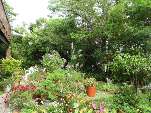 A garden outside Rest Inn Knysna
