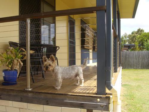 Lemmikki tai lemmikkejä, jotka yöpyvät majoituspaikassa Boneanza