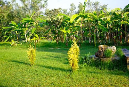 A garden outside Gerakari Thalassa Studios