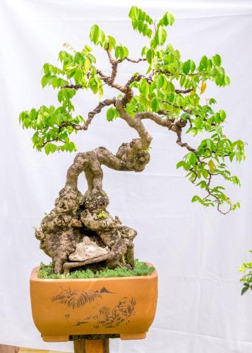 Bonsai Homestay