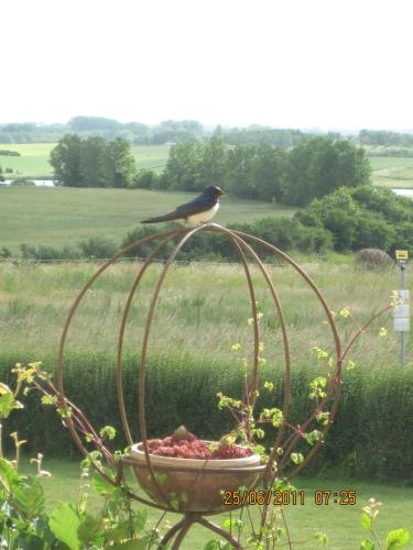 Bed and Birds B&B