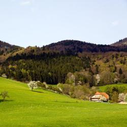 Westerheim 3 hotels