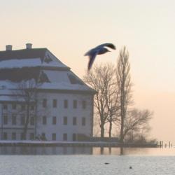 Seewalchen 3 pet-friendly hotels