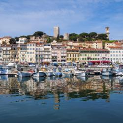Cannes 747 pet-friendly hotels