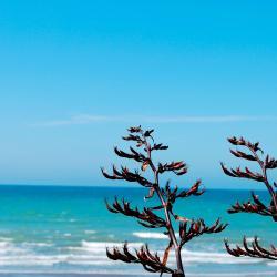 Snells Beach 7 hotels