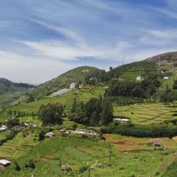 Ooty 12 self catering properties