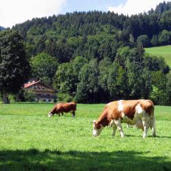 Lindenberg im Allgäu 10 Hotels