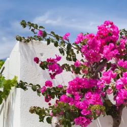 Azolimnos Syros 27 vacation rentals
