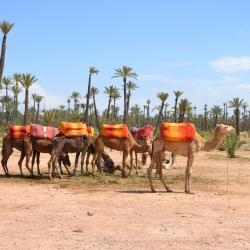 Dar Caïd Layadi 10 hôtels