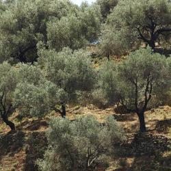 episkopi-heraklion 8 домов для отпуска