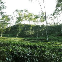 Sylhet 49 hotels