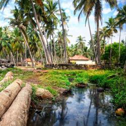 Ambalavayal 13 resorts