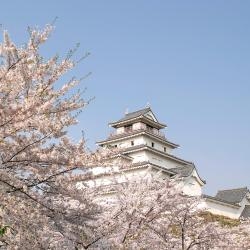 岸和田市 ホテル6軒