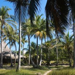 Barú 34 hotels