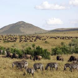 Masai Mara 6 hotels