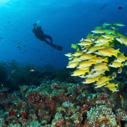 Dhaalu Atoll 8 resorts