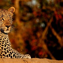 Timbavati Game Reserve 4 glamping sites