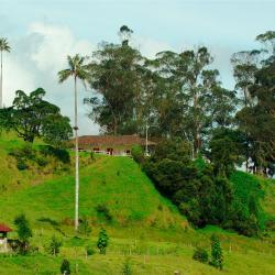 Quimbaya 121 hoteles
