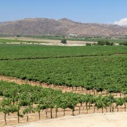 Valle de Guadalupe 5 glamping sites