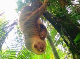 Chilling House & Sloths