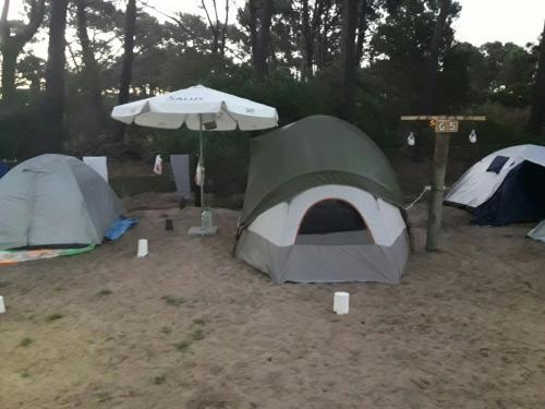 Camping Chihuahua