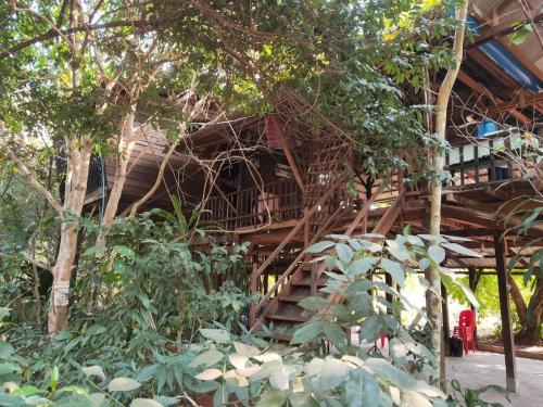 Angkor Ancient Tree House