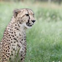 Emdoneni Lodge & Cheetah Project