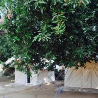 Tutti Hampi Tents & Cafe