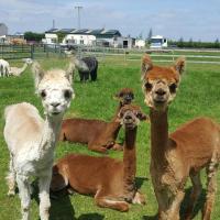 Marshland Alpacas Lodge