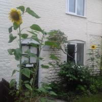 Mauds Cottage 1