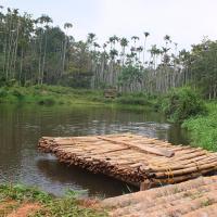 Jungle Valley Resort