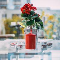 Luxury Rose Suites