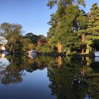 Swan At Streatley