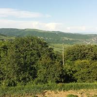 Didgori home