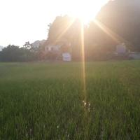 Center Tam Coc Homestay
