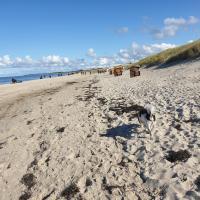 """Ostsee, Strand & Me(e)hr erleben, Speziell für Familien, Fe/wo """"Sunny"""" am Bodden/Fischland/Ribnitz"""