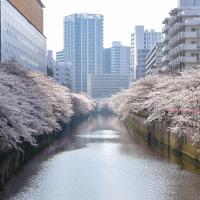 Sakura View House