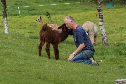 Ray with Max on our Alpaca Farm at Manapouri